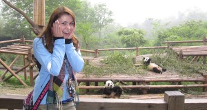 Giant Pandas Everywhere