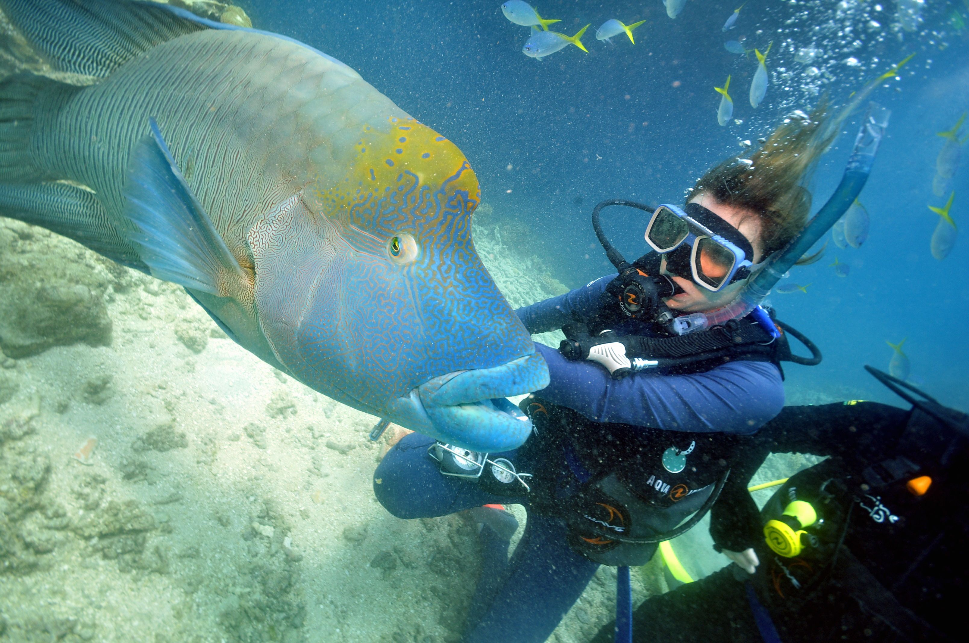 Finding nemo scuba diving the great barrier reef oceania - Dive great barrier reef ...