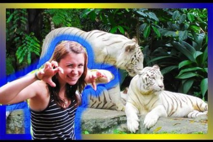 Singapore Zoo –  Lions & Tiger & Baboons?