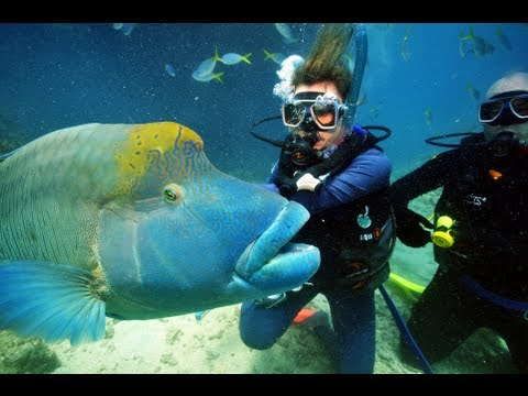 Finding Nemo- Scuba Diving The Great Barrier Reef