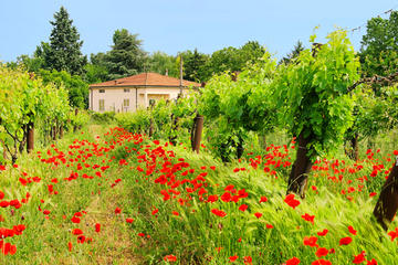 tuscany-in-one-day-sightseeing-tour-from-rome-in-rome-106461