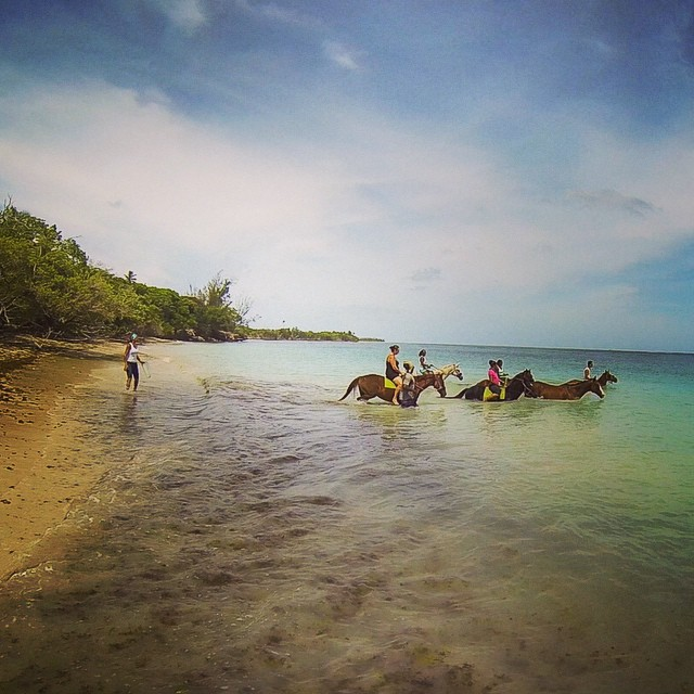 Onwards into the deep we go.... ??? #adventure #tobago #horses