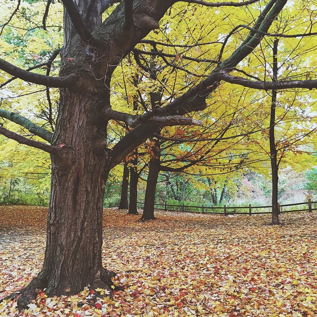 ?? Autumn in Toronto, Canada. #nature P.S. Go check out my snapchat for more Toronto fun! : nadinesykora