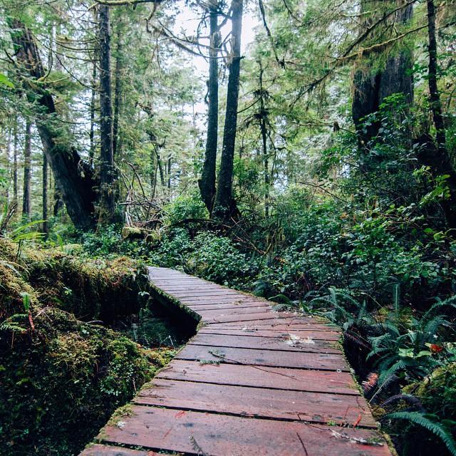 West Coast Gardens. ??? Tofino, Canada. #paths #gardens #wildernessculture #canada #boardwalk #outdoors #nature