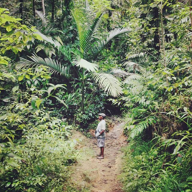 Jungles and Rainforests. ??? Tobago, 2014. #birdwatching #Tobago #Caribbean
